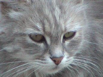 Pussy2.jpg - 23kB